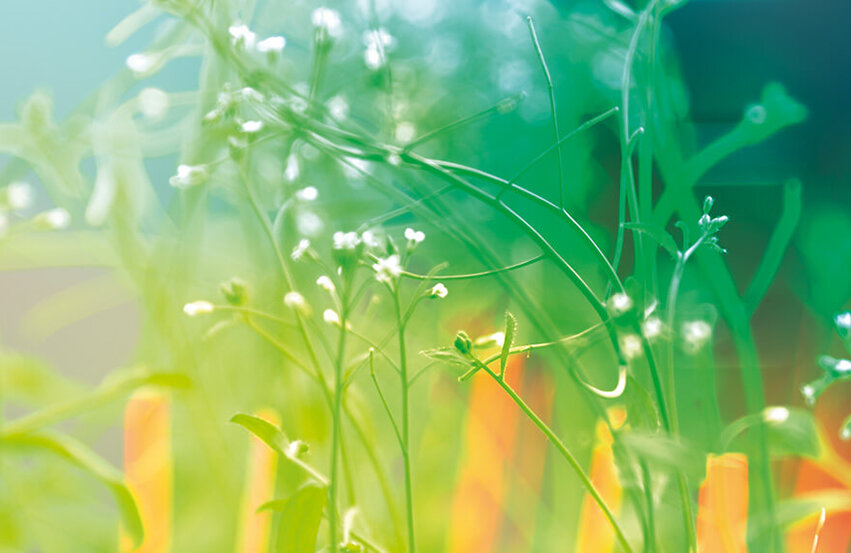 Enceinte de culture pour plantes et insectes Fitotron SGC